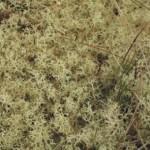 Light Gradient Measurements in Lichen Mats