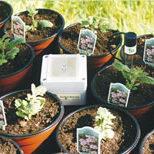 box-plants
